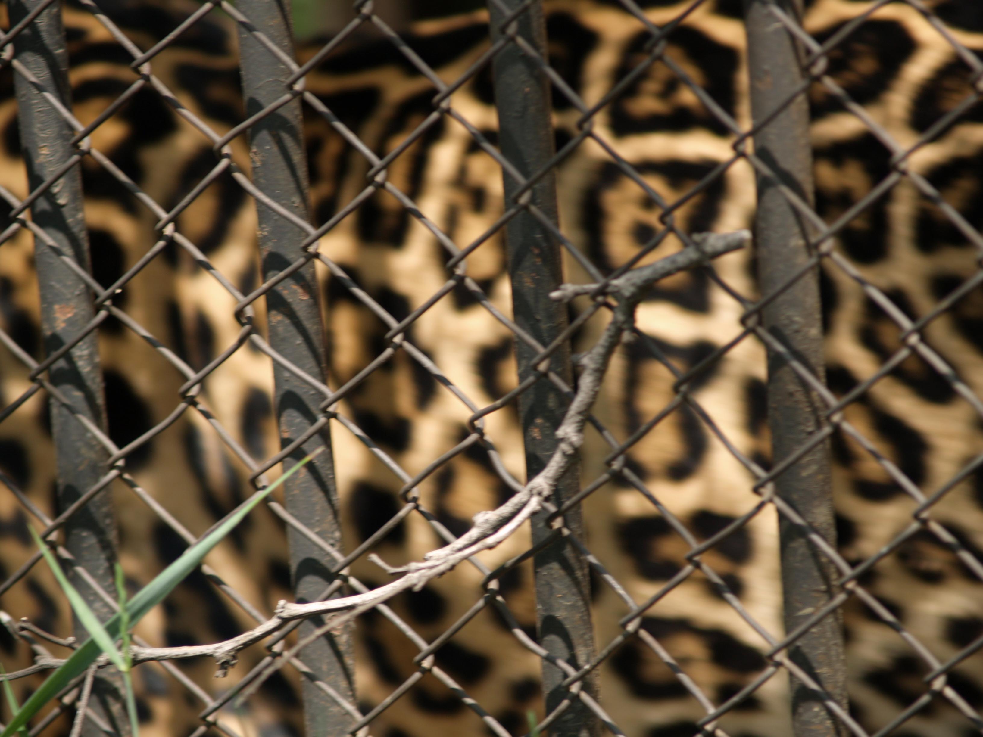 Букви в клетка